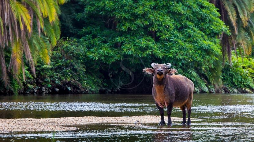Safari en bateau et en kayak sur le fleuve Lekoli, Odzala Discovery Camps © Andrew Howard