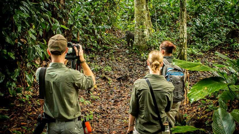 Trek gorilles des plaines de l'Ouest, Odzala Discovery Camps © Andrew Howard