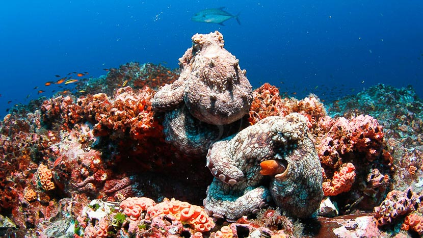 Une biodiversité à protéger, Cocos Island, Costa Rica © Edwar Herreño Undersea Hunter
