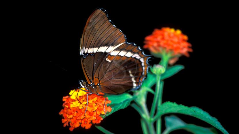 Une biodiversité à protéger, Costa Rica