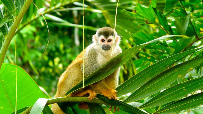 Une biodiversité à protéger, Manuel Antonio, Costa Rica