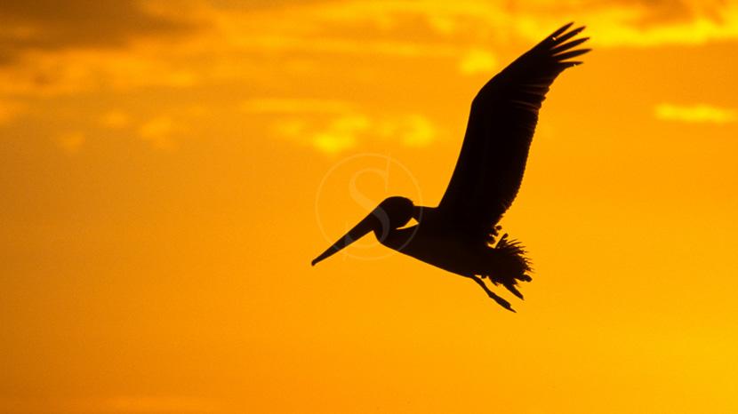 Birdwatching au Costa Rica, Coucher de soleil sur le Pacifique, Costa Rica