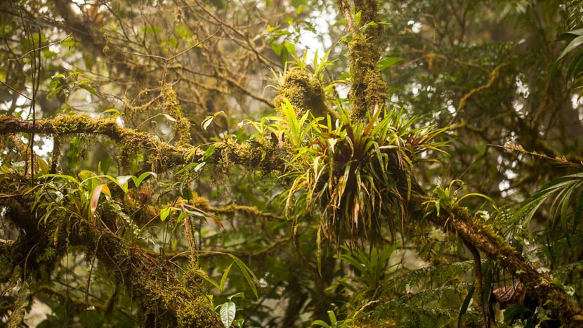 La forêt nuageuse de Monteverde, Monteverde, Costa Rica © Shutterstock