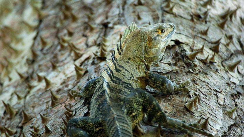 Guanacaste et la Péninsule de Nicoya, Guanacaste,Costa Rica © L. Guillot / Etendues Sauvages