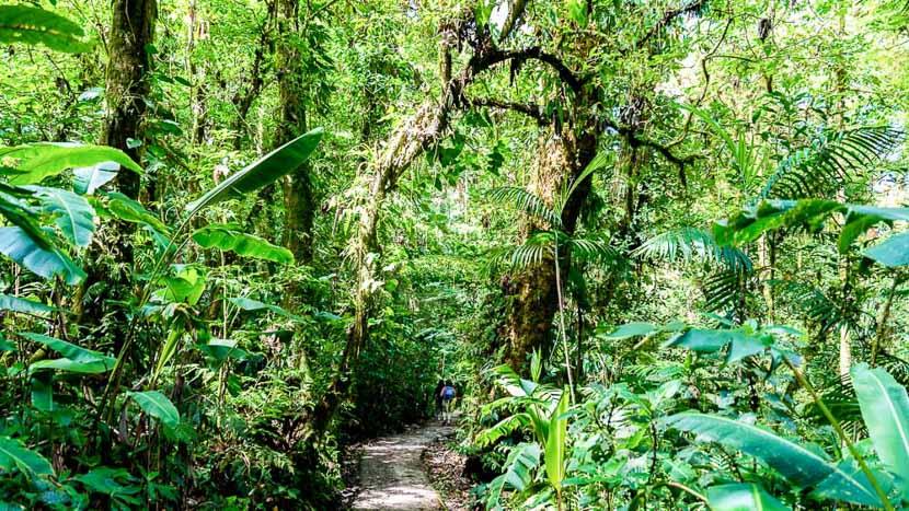 Réserve biologique de Monteverde, Forêt de Monteverde, Costa Rica