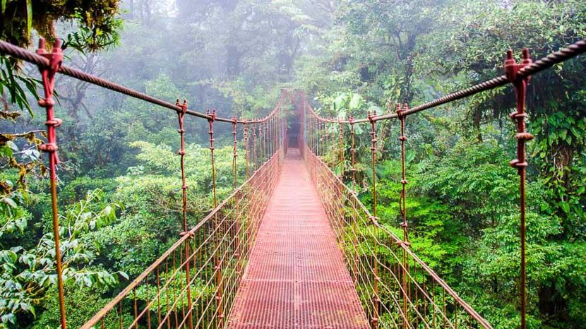 Sky Walk de Monteverde, Forêt de Monteverde, Costa Rica