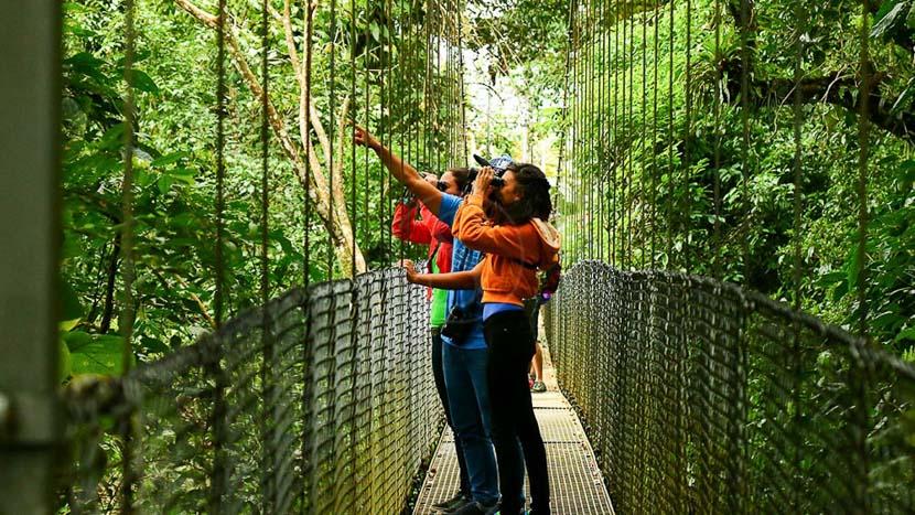 Les ponts suspendus d'Arenal, Ponts suspendus à Arenal, Costa Rica