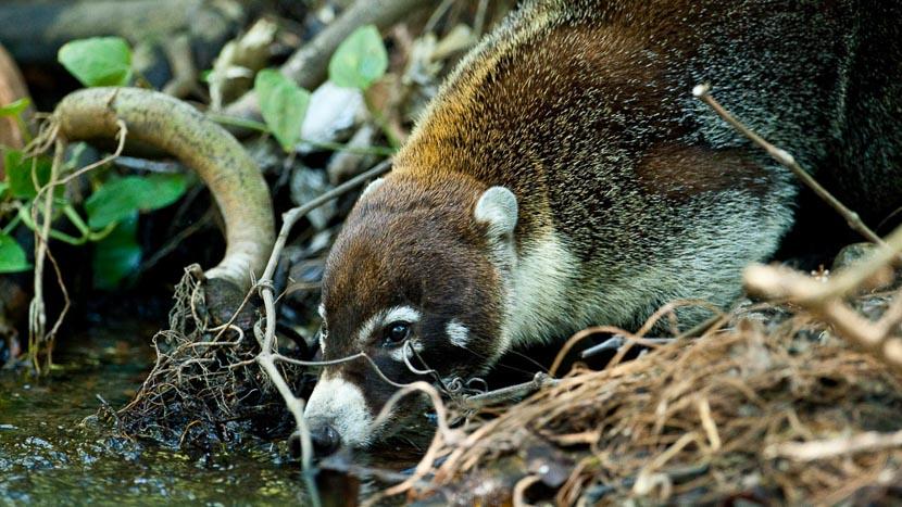 Les activités au Rincon de la Vieja, Rincon de la Vieja, Costa Rica © L. Guillot / Etendues Sauvages