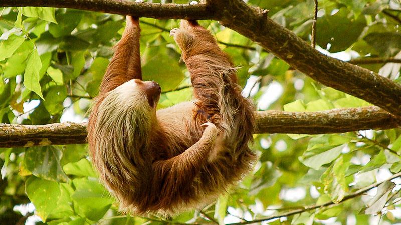 Accro-branche dans les hauteurs à Boquete, Pacuare Lodge, Costa Rica