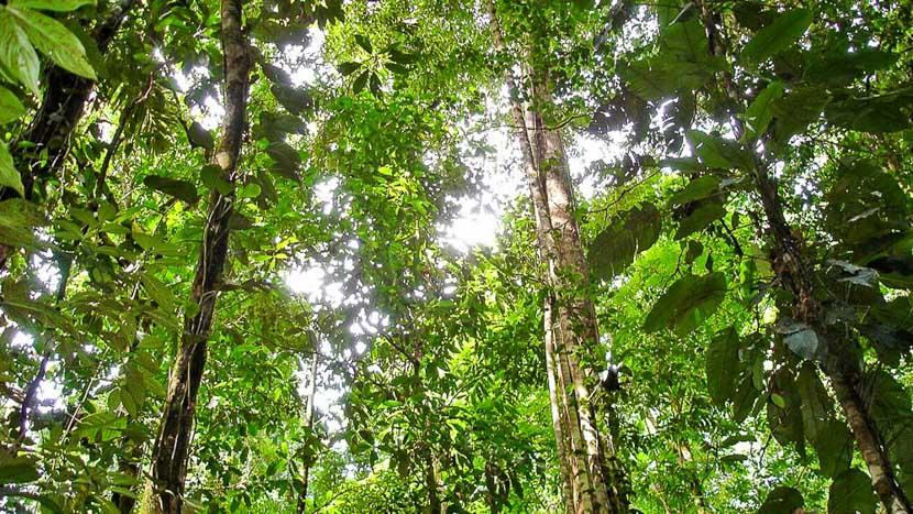 Accro-branche dans les hauteurs à Boquete, Casa Corcovado Jungle Lodge, Costa Rica