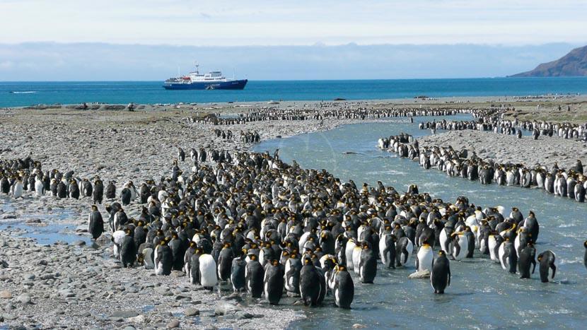 Le grand tour des Falklands et Georgie du Sud, Georgie du Sud © Oceanwide Rob Tully