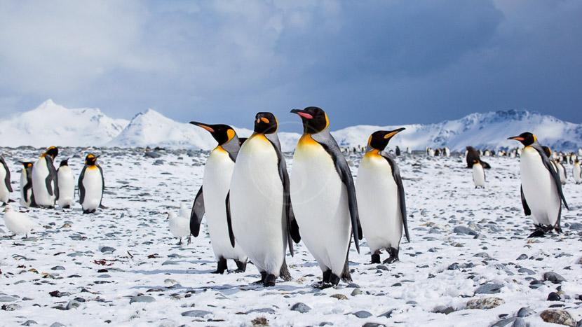 Le grand tour des Falklands et Georgie du Sud, Georgie du Sud © Oceanwide Anneke Dallmeijer