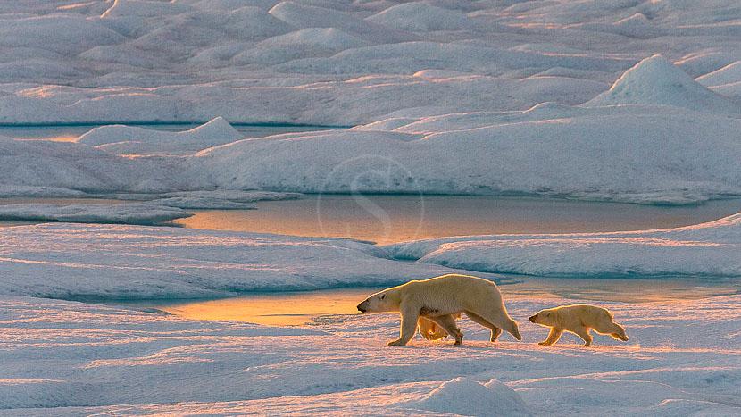 Passage du Nord Est, Croisière en Arctique © Ponant
