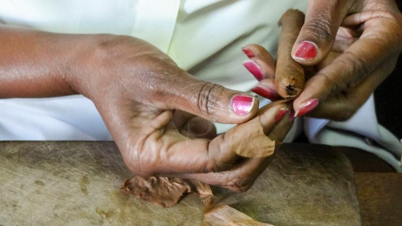 Dégustation de habano, Amateurs Cigares, Cuba
