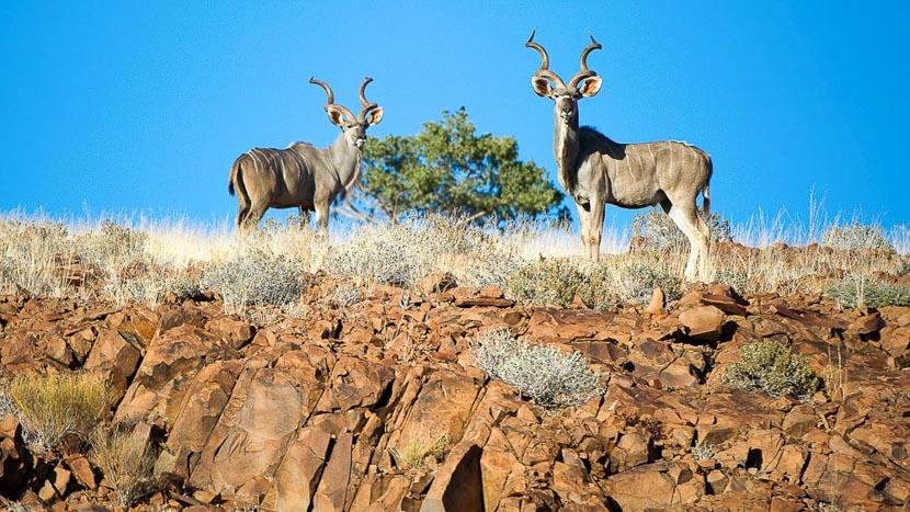 Massif du Brandberg, Damaraland Camp, Namibie © Dana Allen - Wilderness