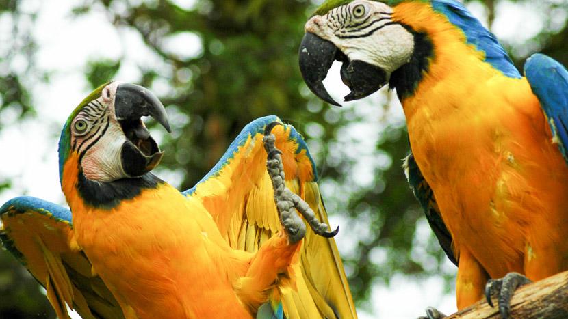 Croisière sur l'Anakonda Amazon Explorer 5 jours/4 nuits,