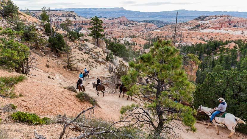 Balade à cheval à Red Canyon, Balade à cheval à Bryce, Etats-Unis © Shutterstock