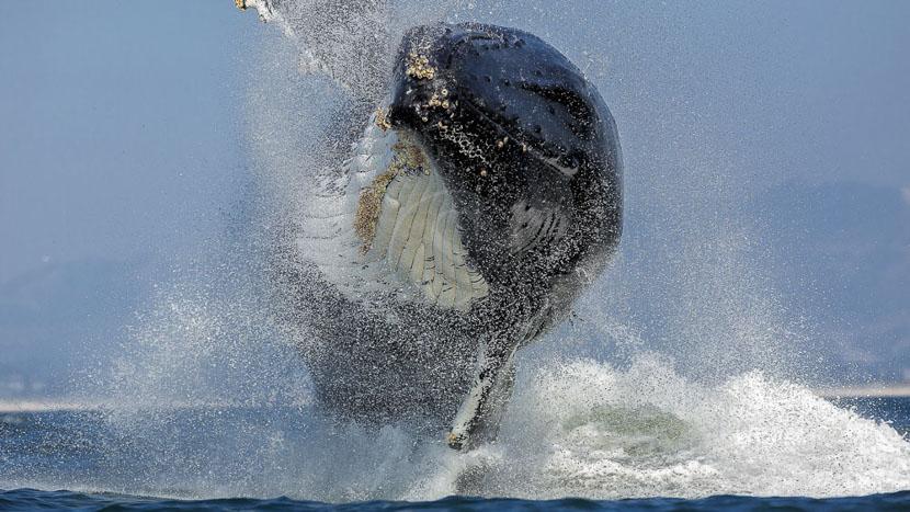 Sortie observation des baleines à Monterey, Baie de Monterey en Californie, Etats-Unis © Shutterstock