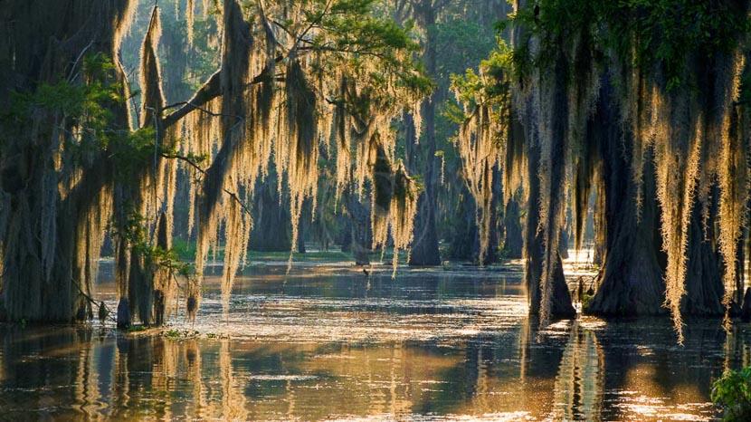Immersion dans les bayous, Le Bayou, Etats-Unis © Shutterstock
