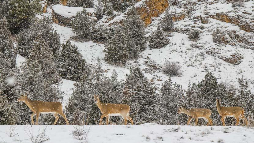 Activités hivernales au Ranch at Rock Creek, The Ranch at Rock Creek, Etats-Unis © Tous droits réservés
