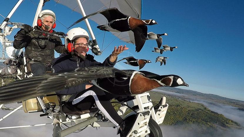 Voler avec les oiseaux, Voler avec les oiseaux © Tous droits réservés