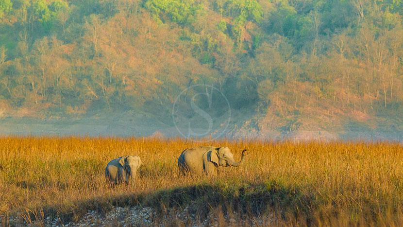 Parc national Jim Corbett, Parc de Corbett, Inde © Shutterstock