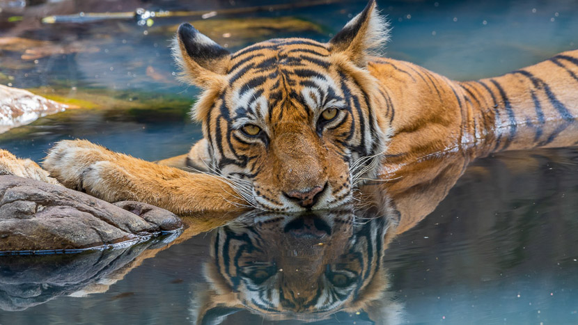 Parc national Jim Corbett, Corbett, Inde © Varun Mathur