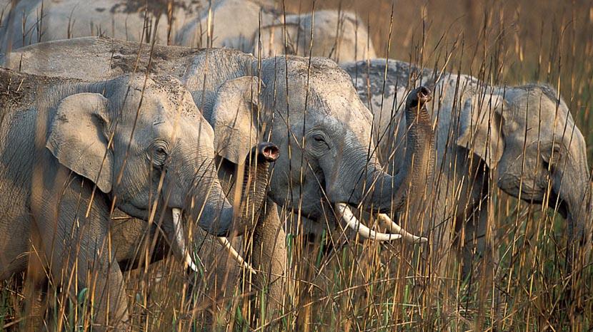 Les parcs nationaux en Inde, Safari en Inde © Alain Pons