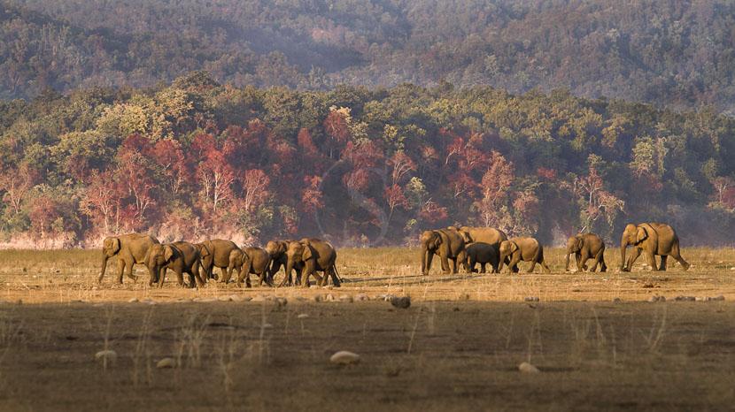 Les parcs nationaux en Inde, Parc de Corbett, Inde