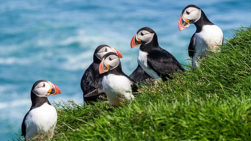 Safari sur la côte sud de l'Islande, Région de Dyrholaey, Islande © Sstok