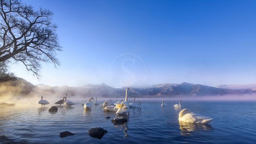 Parc national d'Akan, Ambiance d'Hokkaido, Japon © shutterstock