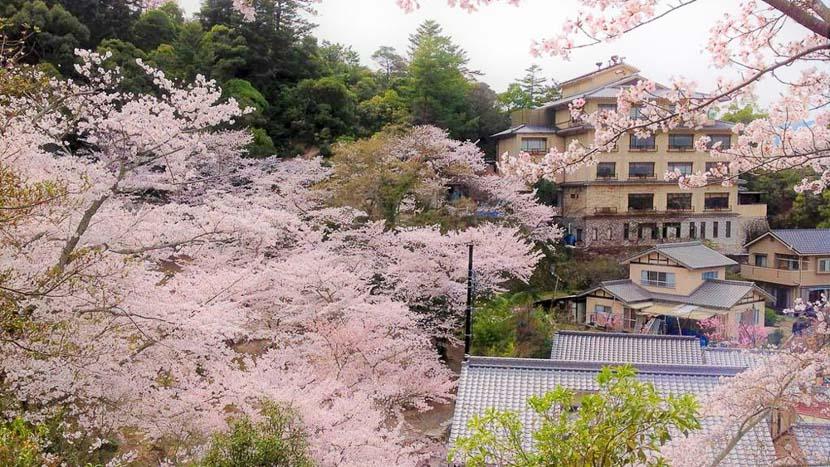 Les cerisiers en fleur, Jukeiso Hotel, Japon
