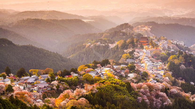 Les cerisiers en fleur, Yoshinoyama dans la région de Nara, Japon