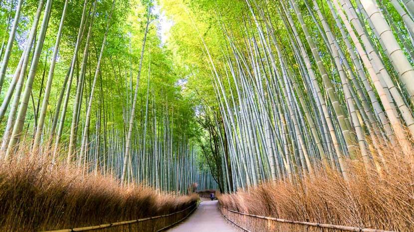 Kyoto, Forêt de bambous de Sagano à Kyoto, Japon