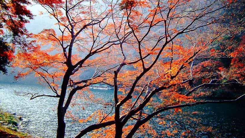 Kyoto, Couleurs d'automne à Kyoto, Japon © jnto