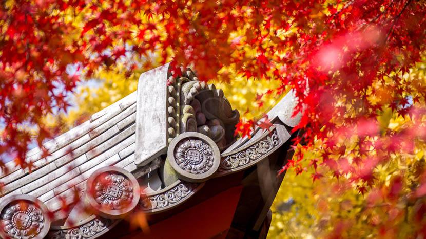 Kyoto, Ambiance d'automne à Kyoto, Japon