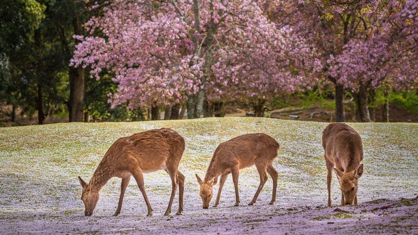 Nara, Nara, Japon