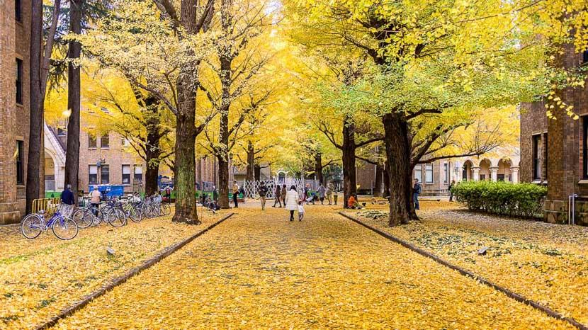 Tokyo, Université de Tokyo, Japon