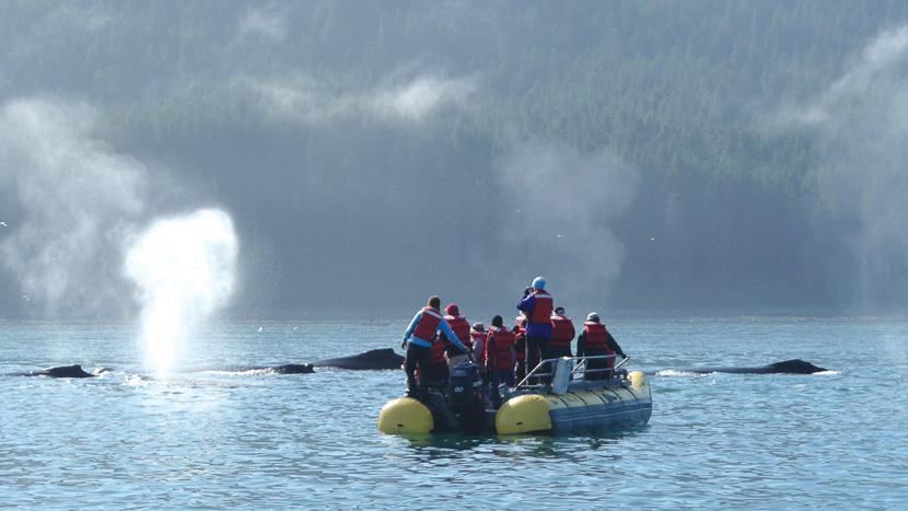 Croisière dans les îles Aléoutiennes, Baleines à bosse, Alaska © OT Alaska