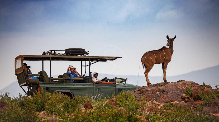 Concessions privées du plateau de Laikipia, Loisaba Conservancy, Kenya © Elewana Properties