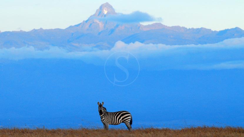 Safari à cheval à Laikipia, Laikipia Ol Pejeta, Kenya @ Kicheche Camps