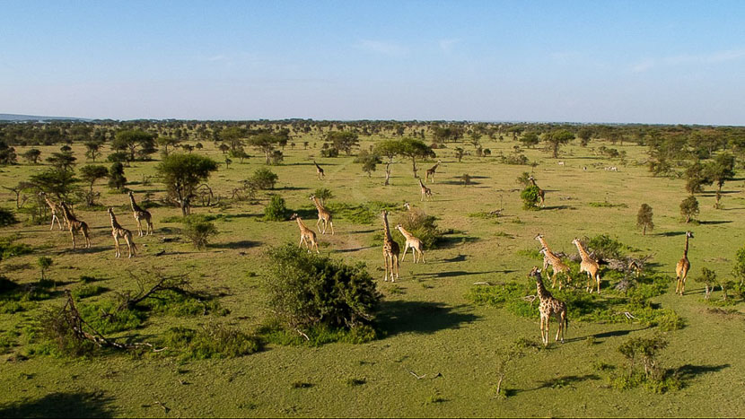 Réserve du Masai Mara, Safari au Kenya © M.Denis-Huot / Fornier