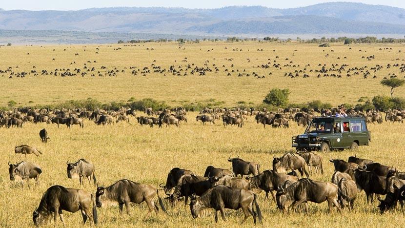 Réserve du Masai Mara, Rekero Camp, Kenya @ Asilia
