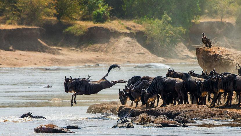 La grande migration dans le Masai Mara, Migration dans le Masai Mara, Kenya © Shutterstock