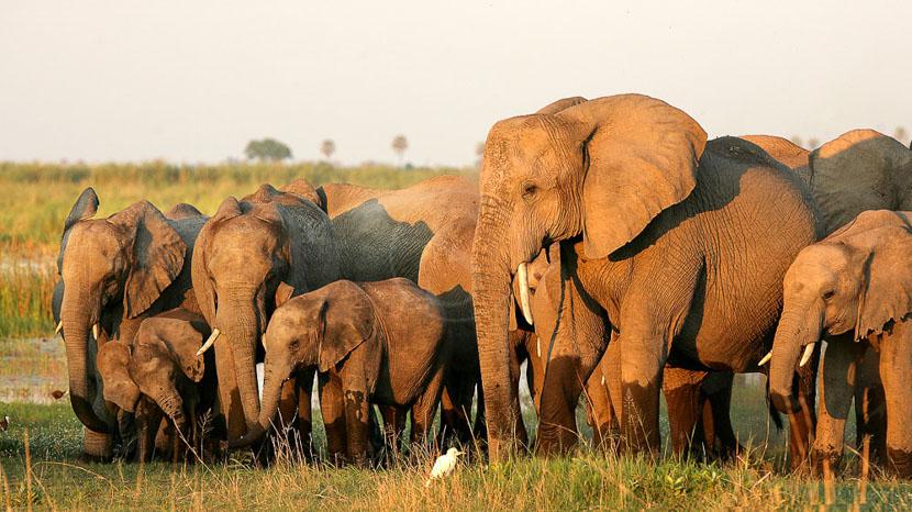Safari à pied dans le Masai Mara, Safari au Masai Mara, Kenya © &Beyond / Alan Murray