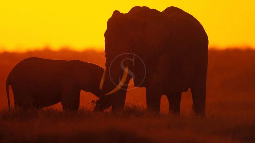 Safari à pied dans le Masai Mara, Safari au Masai Mara, Kenya © &Beyond / Ron Magill