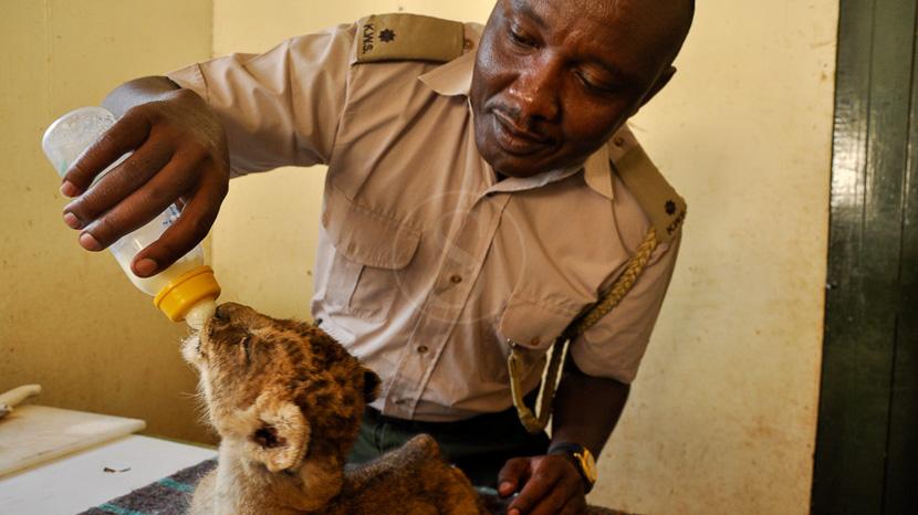 Nairobi Animal Orphanage, Nairobi Orphinage, Kenya @ KWS