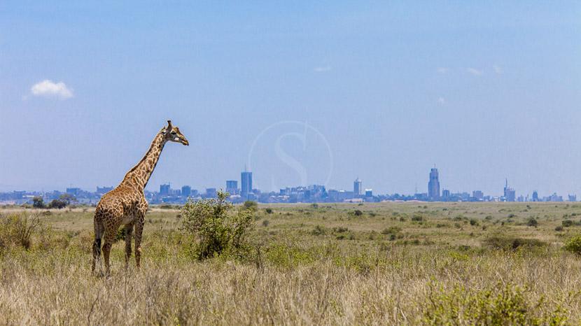 Parc national de Nairobi, Parc National de Nairobi, Kenya