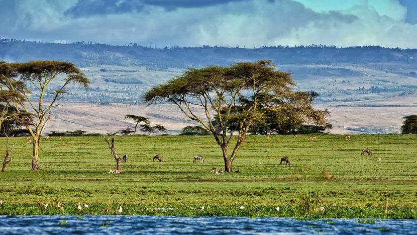 Lac Naivasha, Ambiance du Lac Naivasha, Kenya