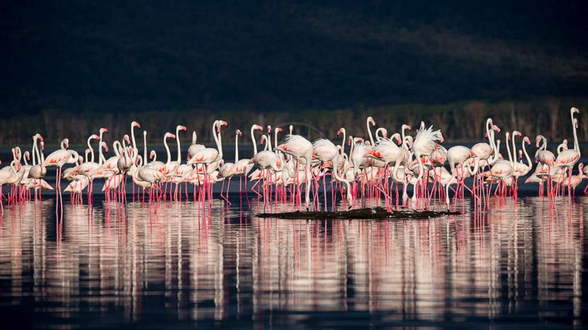 Lac Nakuru, Ambiance du Lac Nakuru, Kenya